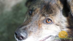 HelferhundeAllerlei-SHOP 315