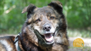 HelferhundeAllerlei-SHOP 318