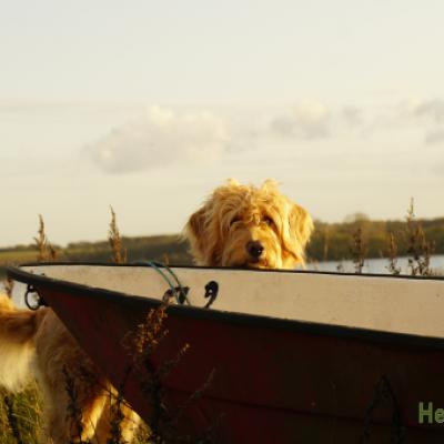 HelferhundeAllerlei-SHOP 323